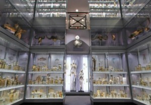 hunterian-museum-london